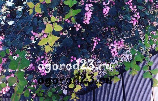 Виды кустарников