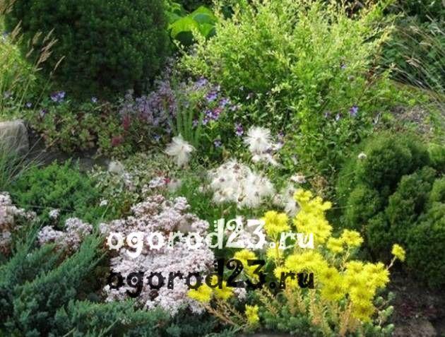 Декоративные кустарники для дачи, фото и названия 1
