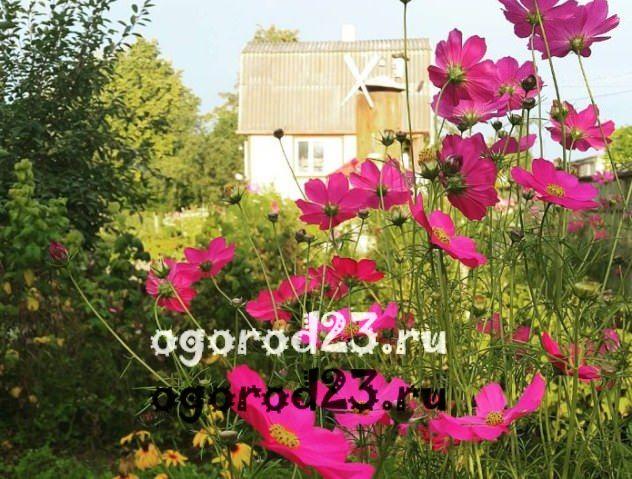 цветы похожие на ромашки 27