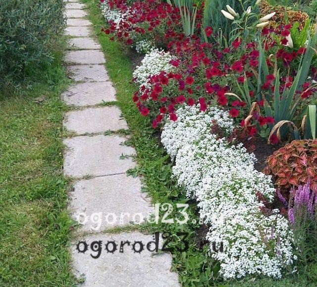 ароматные цветы для сада 22