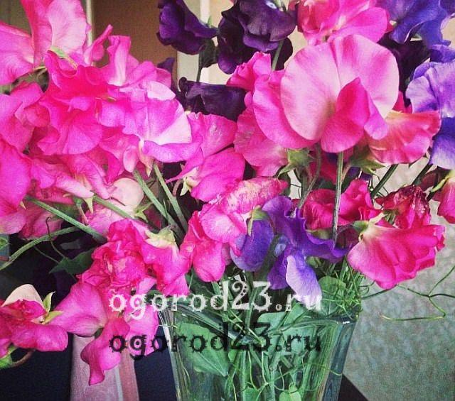 ароматные цветы для сада 9