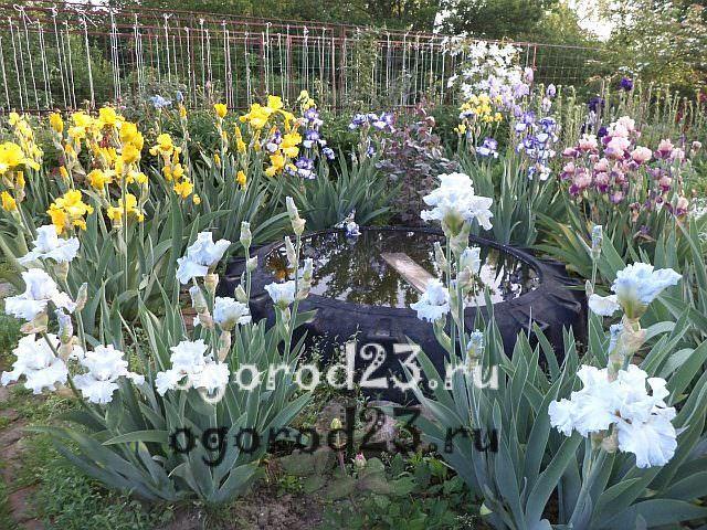 ароматные цветы для сада 34