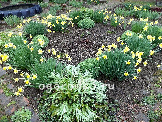 ароматные цветы для сада 35