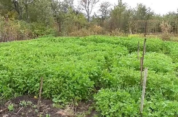 осенние удобрения для сада и огорода 7