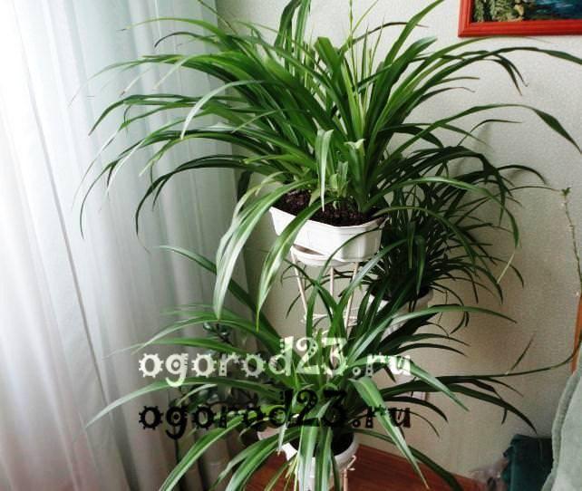 комнатные растения, которые нельзя держать дома – фото и названия 28