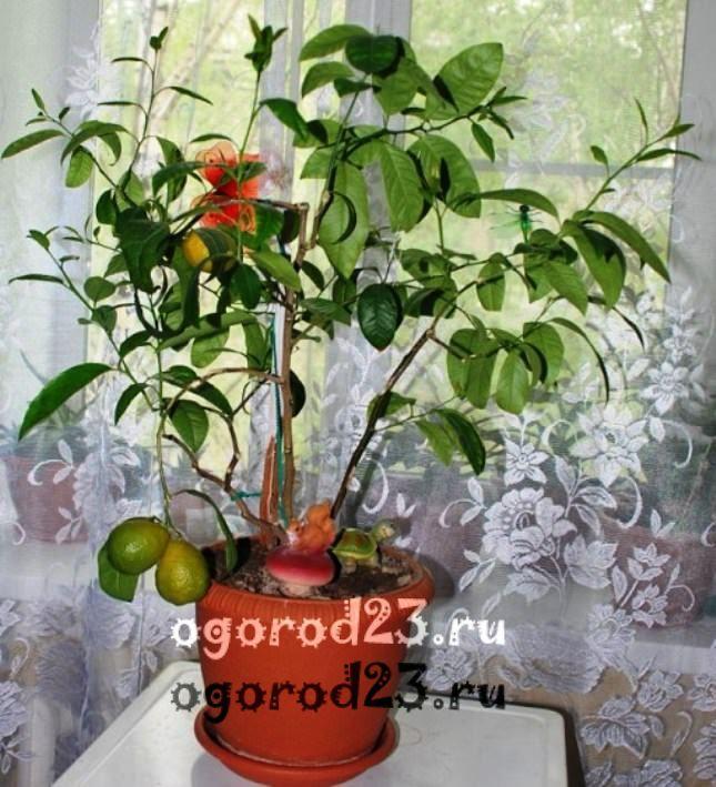 комнатные растения, которые нельзя держать дома – фото и названия 21