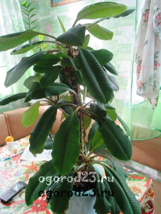 комнатные растения, которые нельзя держать дома – фото и названия 1