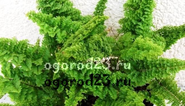 комнатные растения, которые нельзя держать дома – фото и названия 25