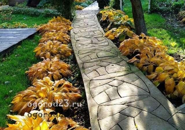 Какие многолетние цветы сажают осенью 7