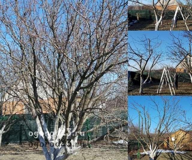 Обрезка деревьев осенью 1